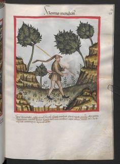Folio 58r (page 119). Tacuinum sanitatis, Codex Vindobonensis, series nova 2644. Northern Italy, probably Verona, 1380-1399.