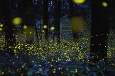 Awww Firefly