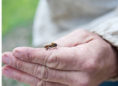 The Bee Whisperer | Mark Paterson | apiary manager at Full Circle Farm