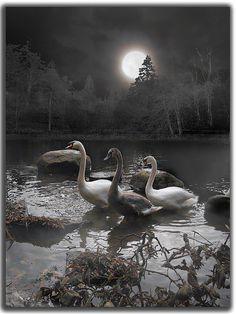 #moon #luna #lunar #night #celestial #stars #fullmoon #moonlight #nature #beautiful #sky #nightsky #crescentmoon #crescent