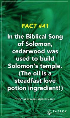 Fact No. 41 #TazekaFacts