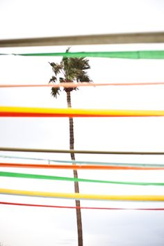Stripes and Palms