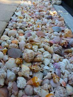 row of seashells along a walkway or garden border