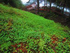 Parque Nacional Puyehue, Chile.