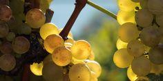 Terre, eau, air et feu: les quatre éléments qui façonnent les vins suisses Vineyard, Fire, Earth