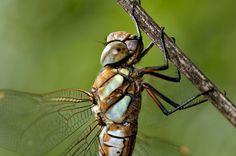 Migrant Hawker by Mark Johnson on 500px