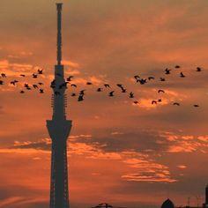 スカイツリー   #tower #東京スカイツリー #sky #skyporn #skylovers #空#ptk_japan #タワー#ig_gallery #skyshotarchive #夕焼け #japan_daytime_view #clouds #as_archive #reflection #igers  #ig_japan #icu_japan #loves_nippon  #instagood#exclusive_shots#instaphoto  #instagramjapan#landscape #japan #wu_japan #silhouette #skytree#special_spot_#team_jp_東 by waiai04jun