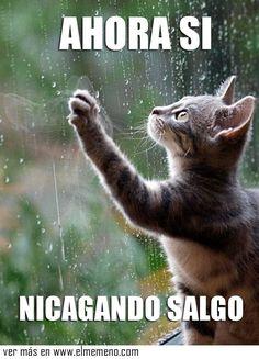 Cuando ves lluvia afuera, te quedas adentro sin culpa