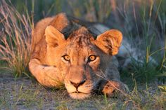 South African safaris for first-timers: 8 tips - Lonely Planet