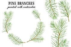 Watercolor pine branches by Helga Wigandt on Creative Market