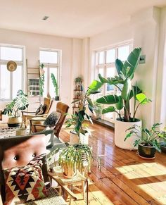 Living Room Decor With Plants In The Home House Hippie Apartment