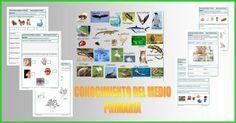 Fichas de Conocimiento del Medio para Primaria