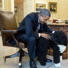 """Barack Obama Fanpage: """" #theobamas #bo #sunny #Barackobama #stillmypresident #obamaisthebest #thanksobama #potus…"""""""