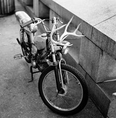 I'm totally putting antlers on my moped.