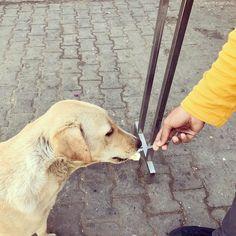 Pyara Bachcha  #love dog #feed #dog