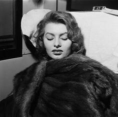 Sophia Loren takes a nap.