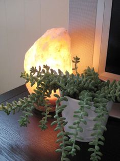 One of my favorite authors mentioned the benefits of a salt lamp and it was all the encouragement I needed to make one mine. Here's hoping it helps when allergy season rolls around. My New Room, My Room, Salt Rock Lamp, Cactus, Young House Love, Himalayan Salt Lamp, Tabletop Accessories, Home Comforts, Cacti And Succulents