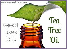 tea-tree-essential-oil/ for sinus infection (from Your Food Corner)