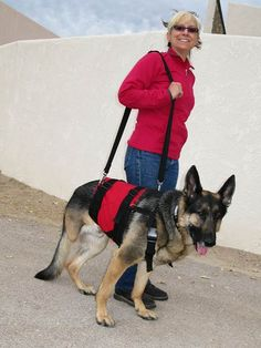 Reviews and recommendations of the best mobility, walking and support harnesses for three-legged amputee Tripawd dogs.