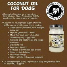 CocoNut Oil on - homemade dog shampoo without glycerin. Homemade Dog Shampoo Without Glycerin Coconut Oil For Dogs, Coconut Oil Uses, Dog Health Tips, Pet Health, Health Care, Gato Gif, Oils For Dogs, Dog Diet, Homemade Dog Treats