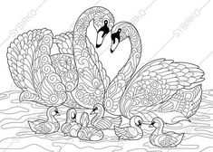 Illustration of Coloring book page of swan birds family. Freehand sketch drawing for adult antistress colouring with doodle and zentangle elements. vector art, clipart and stock vectors. Bird Coloring Pages, Adult Coloring Pages, Coloring Books, Zentangle, Illustrator, Zen Colors, Diy Y Manualidades, Drawing Sketches, Drawings