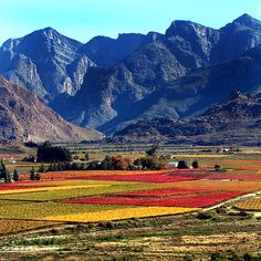 Beautiful farmlands and majestic mountains. Welcome to South Africa!