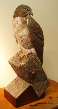 Red Tail Hawk LIFE-SIZED ~ OIL & WOOD ~ SUPER FINE CARVED DETAIL Carved by Greg Pedersen