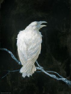 Raven Art Print by Jana Heidersdorf Illustration - X-Small Crow Art, Raven Art, White Raven, Quoth The Raven, Crows Ravens, Fantasy Illustration, Dark Art, Framed Art Prints, Art Sketches