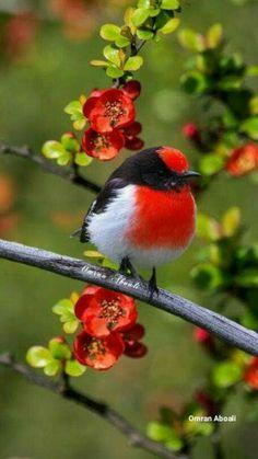 Beautiful birds, ,abstract birds, birds, bird k… - Animal Kinds Of Birds, All Birds, Cute Birds, Pretty Birds, Little Birds, Beautiful Birds, Animals Beautiful, Cute Animals, Angry Birds