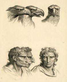 Charles Le Brun, concernant le rapport de la physionomie humaine avec celle des animaux - rapport de la figure humaine avec celle de l'aigle