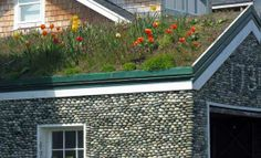 tulips on the roof | Vancouver Island explorations