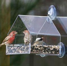 plexiglass bird feeder