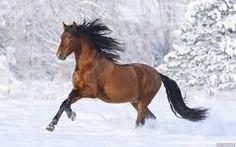 """Képtalálat a következőre: """"lovas képek"""""""