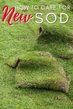 Learn the basics of caring for new sod and answer questions like what type of sod to buy, when it's time to water your lawn and more. #yardcare #lawncare #sodcare Front Yard Landscaping Pictures, Yard Care, Landscape Plans, How To Stay Healthy, Lawn, Adventure, This Or That Questions, How To Plan, Learning