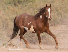 Cherokee Trots  Wild Horse by WildHoofbeats on Etsy, $35.00