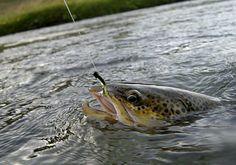 ¡Buen fin de semana de #pesca para tod@s! https://clicandfish.com