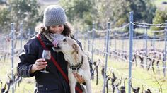 With a glass of wine in hand and a pooch at their feet, dog owners enjoyed a day out with their best friends. Fundraising Ideas, Fundraising Events, Fun Events, Special Events, Dog Park, Dog Owners, Best Friends, Wine, Pets