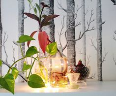 Urban Jungle Bloggers: Plants & Light by It's nice here