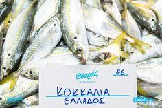 """Κοκκάλια !! Πεντανόστιμα όπως και να τα μαγειρέψετε.. Εδώ στον """"Πσαρά"""" σας ! ☎️Delivery: 231 023 2228  #PsarasIxthiopolion #Ψάρια #Thessaloniki"""