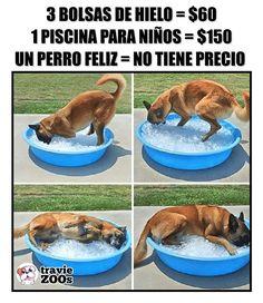 dog training,teach your dog,dog learning,dog tips,dog hacks Dog Commands Training, Basic Dog Training, Training Your Puppy, Potty Training, Training Dogs, Easiest Dogs To Train, Mundo Animal, Boxer Dogs, Doggies