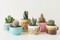 Plantas que sobreviven a tu estilo de vida