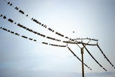 The birds, they are watching