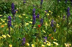 Study Finds Wildflowers Contain More Neonics than Treated Fields