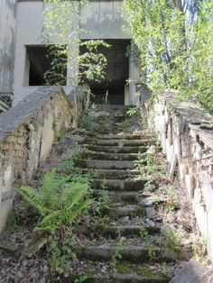 Abandoned mossy stairs