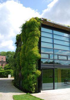 Maison végétale à Bruxelles, vue du jardin, Juin 2010