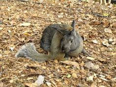 Rabbit and Squirrel...another reason animals trump many humans...doesn't matter the species, they can still be best buds :-)