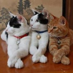 three cats ♥ ♥ ♥