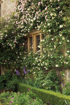 plantes grimpantes pour le jardin, haie vert de jardin, fleurs sur les murs d'extérieur
