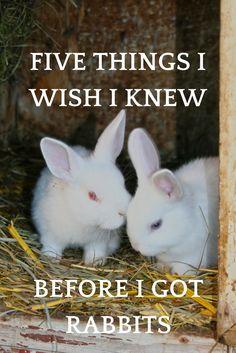 five things i wish i knew before i got rabbits
