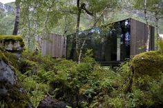 architecture in forest - Google Search